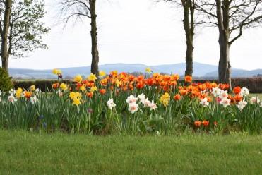 Trochelhill Grounds